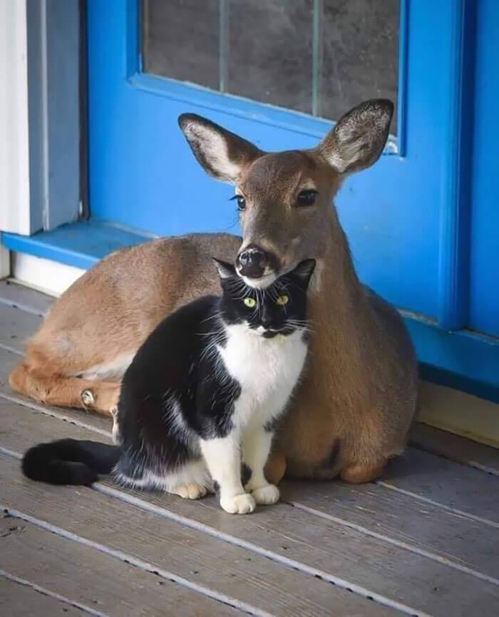 gato e outro animal