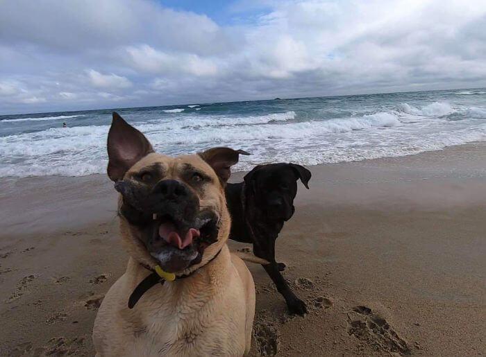 cachorro na praia fazendo careta