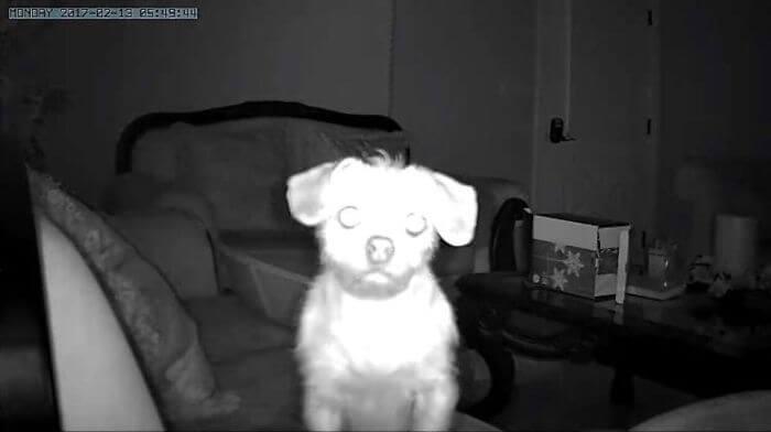 cachorro olhando para camera