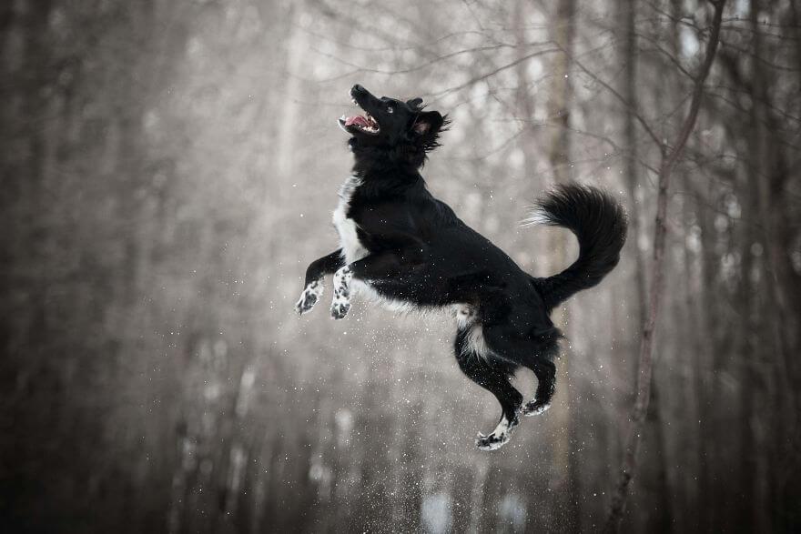 cão preto no ar