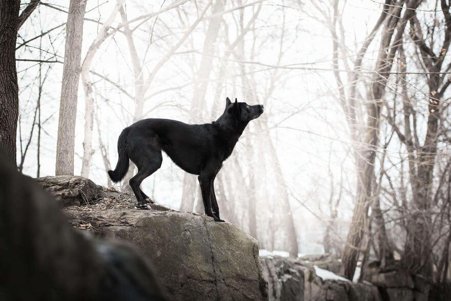 cão preto sobre pedra