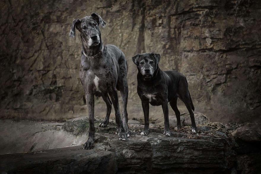 animais pretos