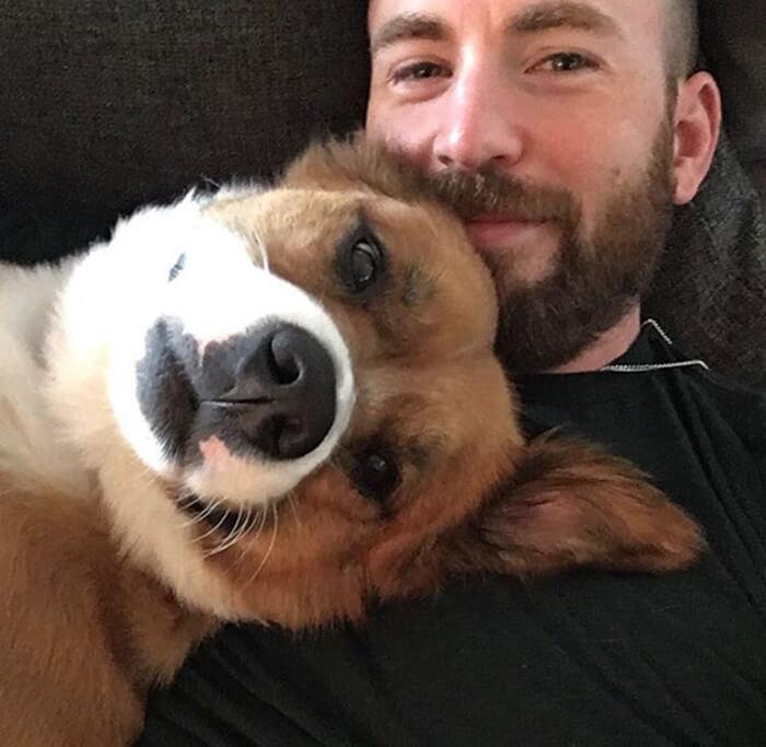 chris evans e cachorro