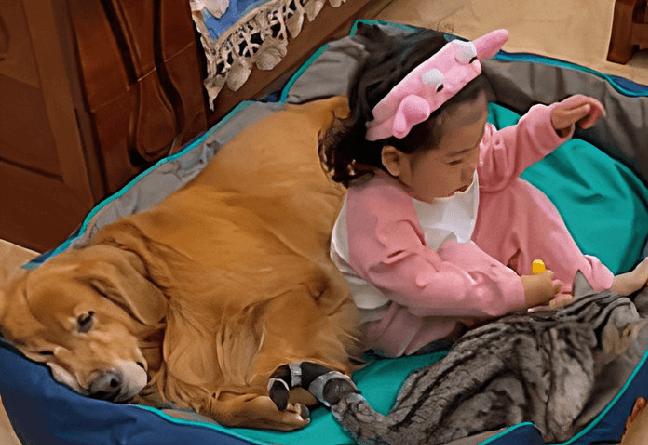 criança dormindo com cachorro e gato