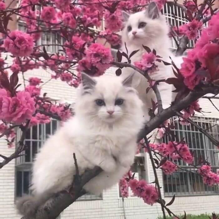 dois gatos brancos em arvore