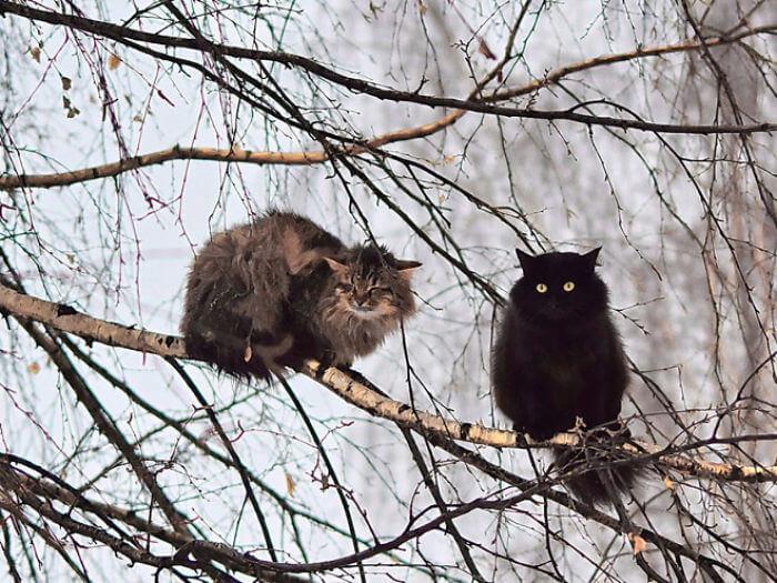 dois gatos em cima da arvore gatos que parecem pássaros