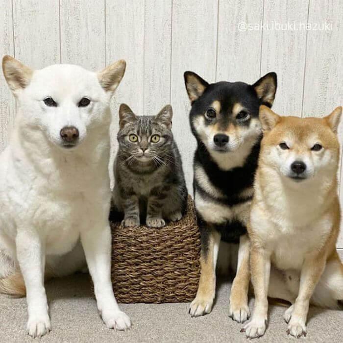 gato com três cachorros