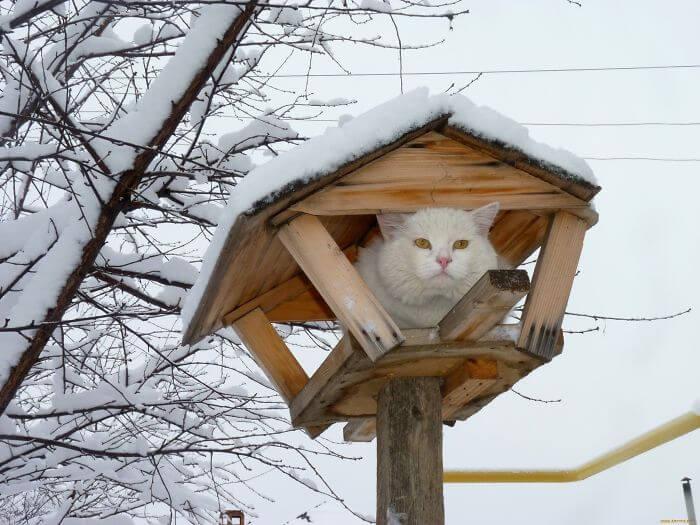 gato dentro de gaiola de passaro