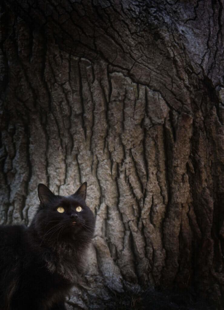 gato peludo preto