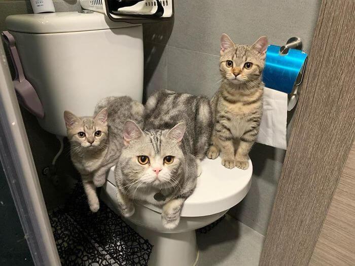 gatos desrespeitando a privacidade