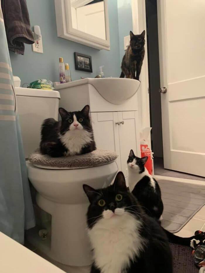 gatos no banheiro
