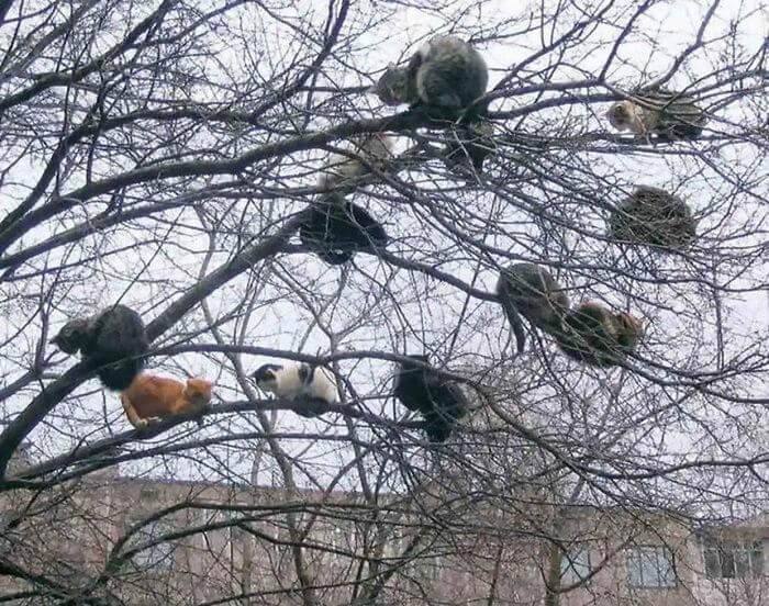 gatos variados em cima de árvore