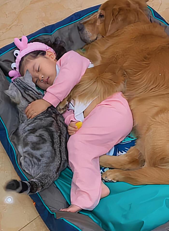 menina dormindo com seu cão e gato